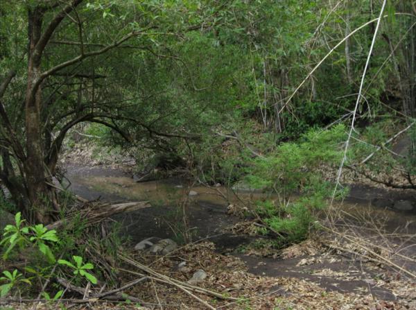 Some foliage encountered on the Khao Pradu Nature Trail